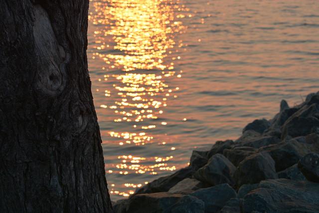外来種問題「ビクトリア湖の悲劇」とは何だったのか?