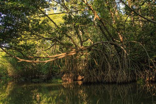 Río Arriba (50)