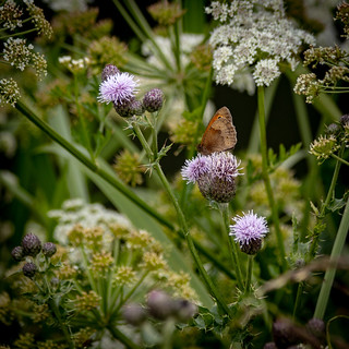 Flowers and a Butterfly