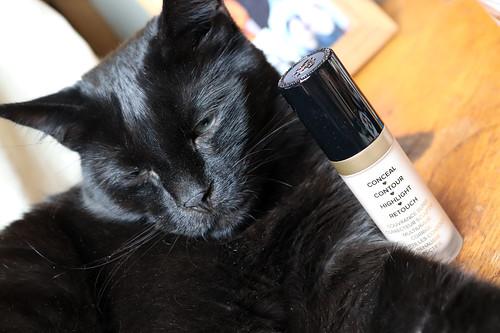 Loa the faithful feline blogging assistant