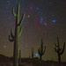 "Desert Nights by IronRodArt - Royce Bair (""Star Shooter"")"