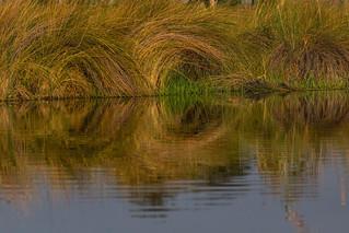 Swirls of Grass