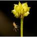 Tiny Spider.