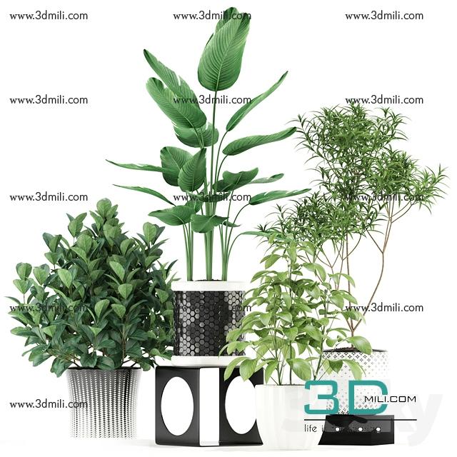 93  Sell AlbumPlant & Vase 3dsky pro 2018 - 3D Mili - Download 3D Model -  Free 3D Models - 3D Model Download