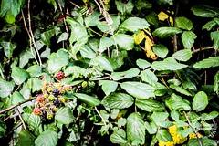 Fruity bush