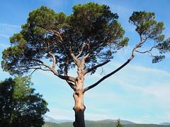 Pi - Prada de Conflent - Photo of Campoussy