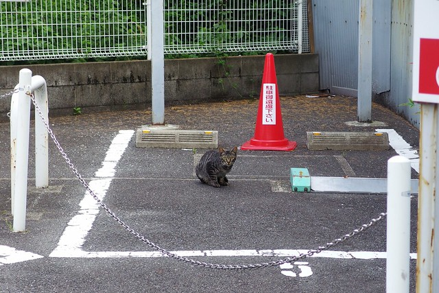 Today's Cat@2018-06-24