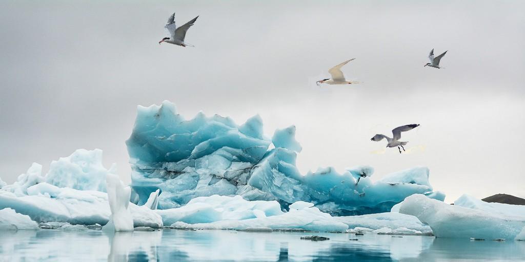Les populations d'oiseaux comme indicateur du changement climatique
