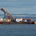 Swan - Burntisland - 06-08-18