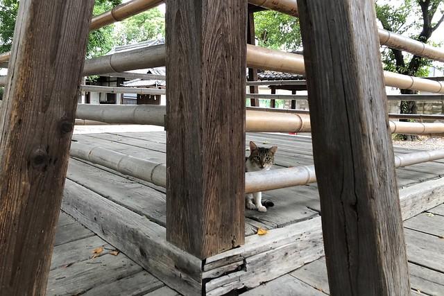 Today's Cat@2018-08-16