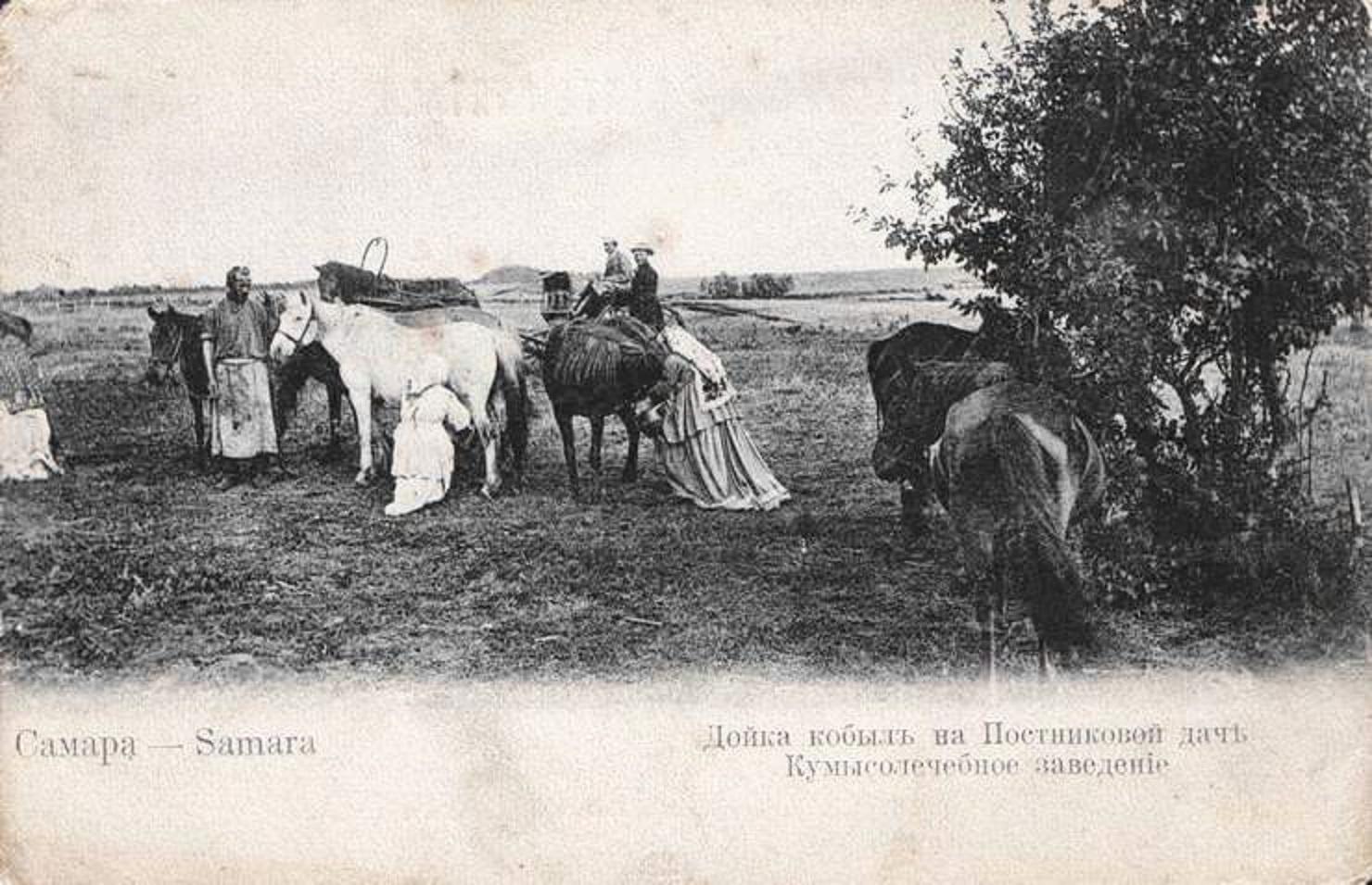 Окрестности Самары. Дойка кобыл на Постниковой даче.