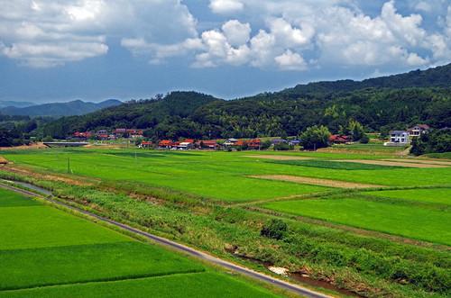 Rice Fields in Mine toward Akiyoshidai, Yamaguchi  山口県 美祢市