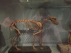Animal skeletons at mummified animal section in the Egyptian Museum of Cairo
