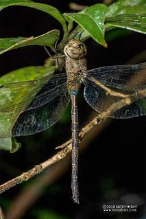 Dragonfly - DSC_7818