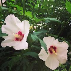 Flor, flors