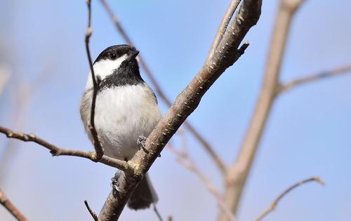 lacboivin granby bird oiseau landscape lac riviere