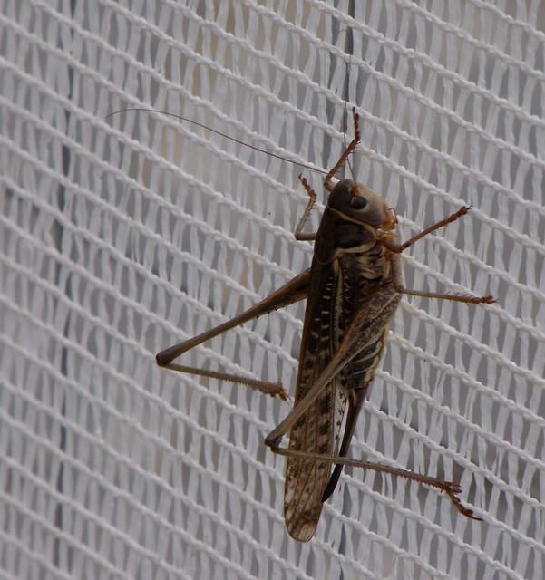 Grasshopper, Fujifilm FinePix S1000fd