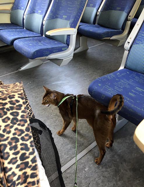 jakeopday-trainIMG_4214