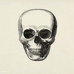 Vintage llustration of skull published in 1843 by John Lloyd Stephens (1805-1852).