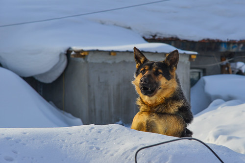 A dog standing on snow