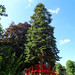 Tree behind Grosvenor Park play-area, 2018 Jul 08