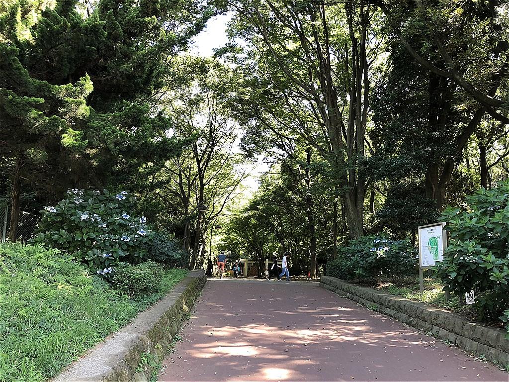 20180630_光が丘 (1)
