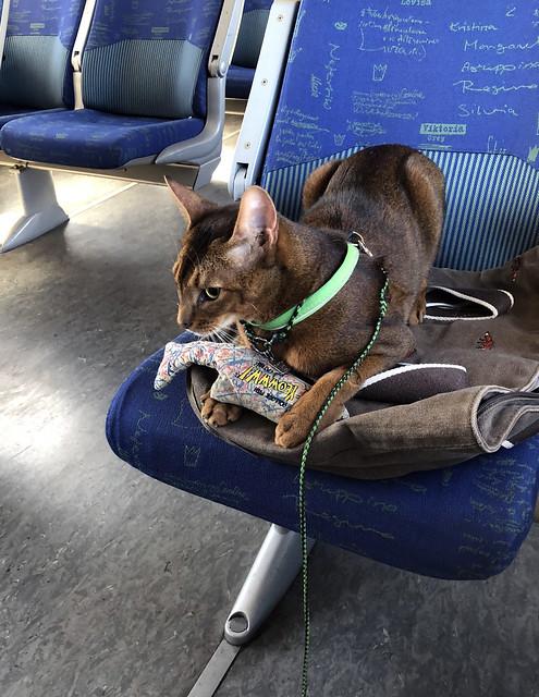 jakeopday-trainIMG_4229
