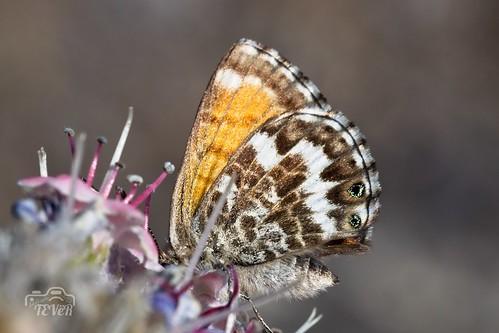 Mariposa (4)