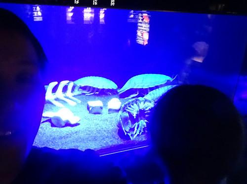 オオグソクムシ 深海水族館