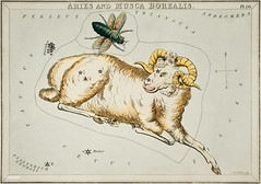Sidney Hall's (1831) astronomical chart illustration of Aries and Musca Borealis. Original from Library of Congress. Digitally enhanced by rawpixel.