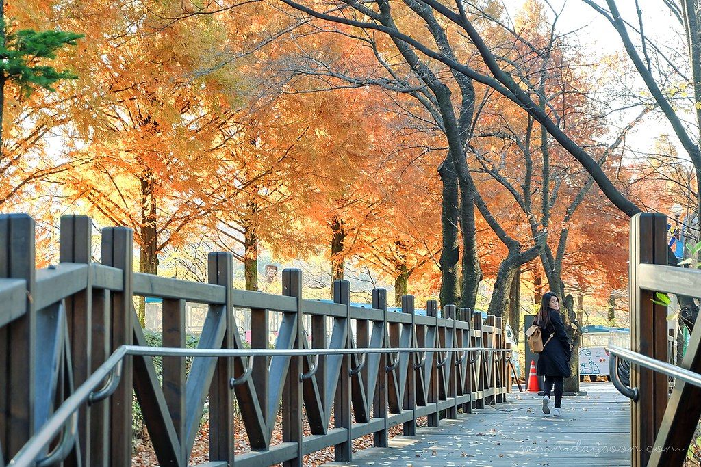 autumn_bridge_korea