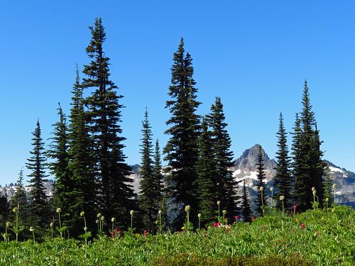 Skyline Trail at Mt. Rainier NP in WA