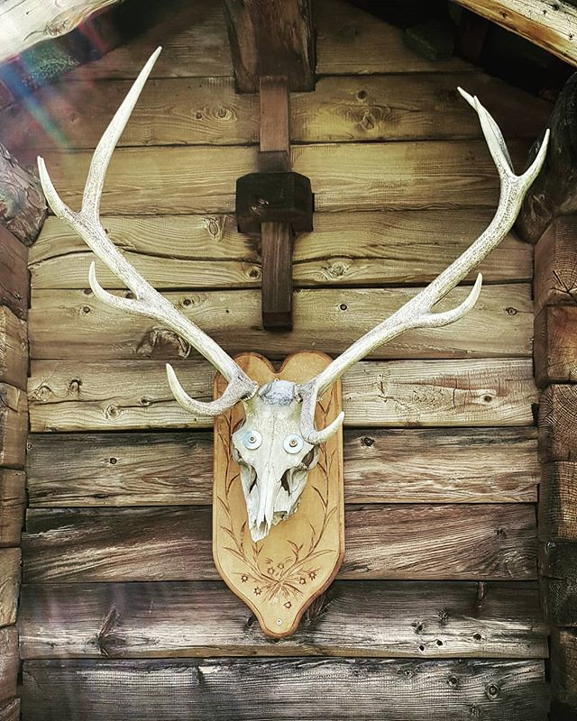 Skull #mountain #hut #wood #skull #animal #igers #igersitalia #travelgram #picoftheday #photooftheday #gressoney #valdaosta #death #old