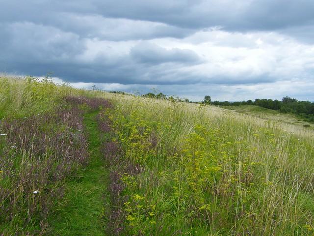 Wild Flower Path, Ham Hill Country Park, Somerset.