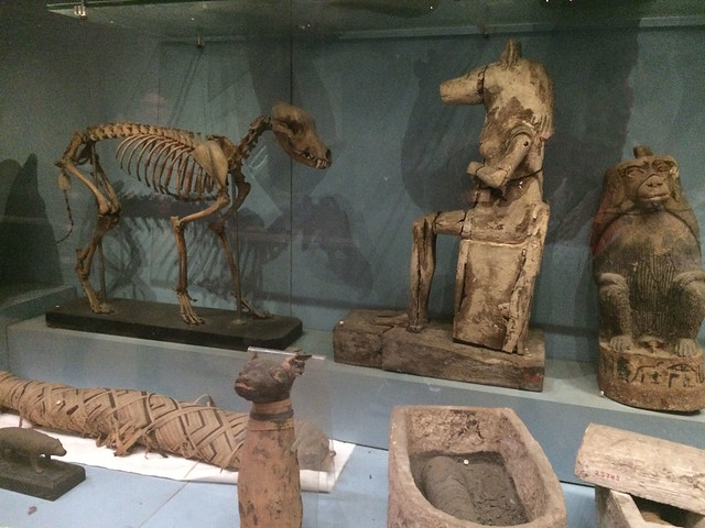 Mummified Animals section at Egyptian Museum of Cairo