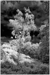 Storm Lit Tree