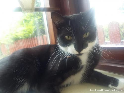 Mon, Jul 16th, 2018 Lost Female Cat - Granby Row, Carlow