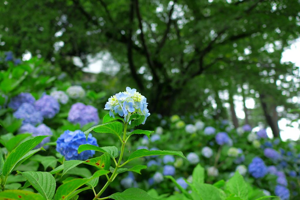Odawara Castle 5