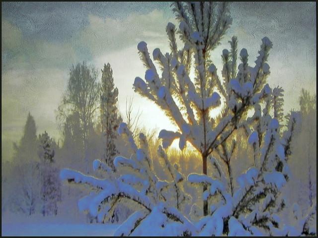 Magic of winter, Nikon COOLPIX P100