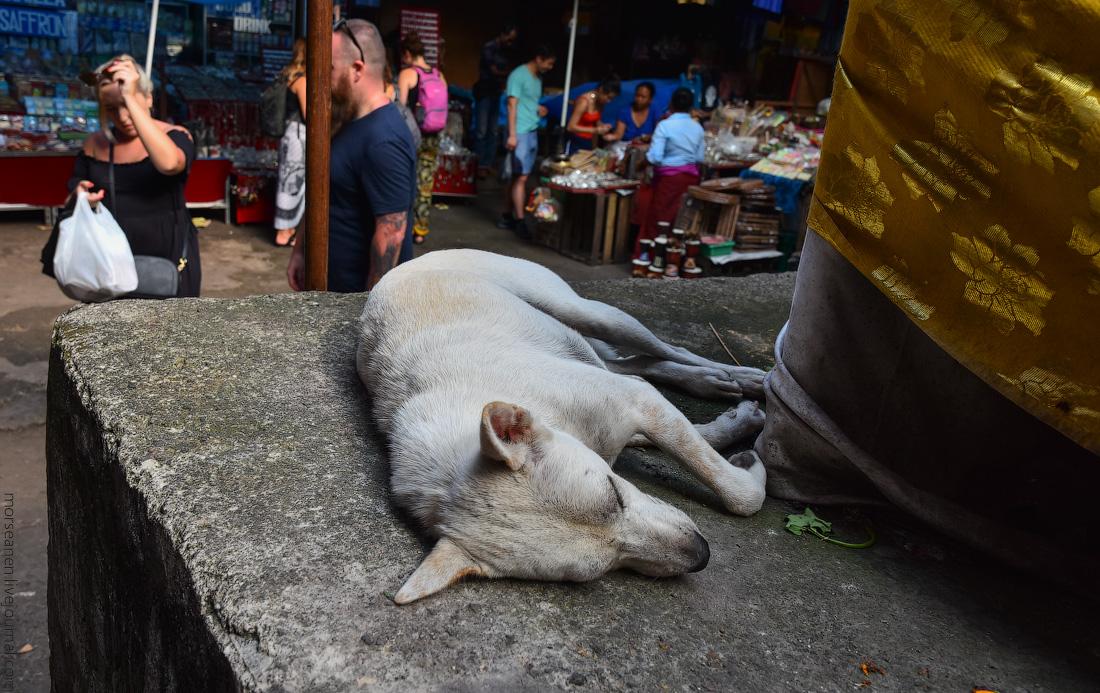 Bali-Ubud-(55)