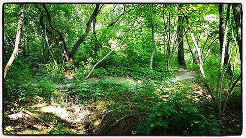 Looping trail #hunterscreekpark #wny #eastaurora #nature #hiking