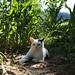Richard Gere & The Corn Plantation by Xena*best friend*