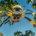 2018-02-23 Mozambique BugShot Day 4 - Air Strip