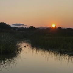 Carmel River Lagoon at sunrise/mallard on the water