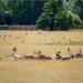 The deer meadow in Bradgate Park