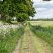 Bridleway near Whixley