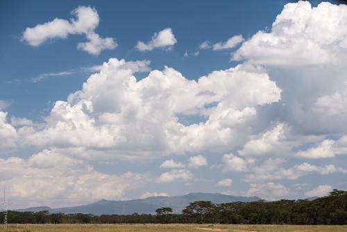 africa lakenakuru kenya