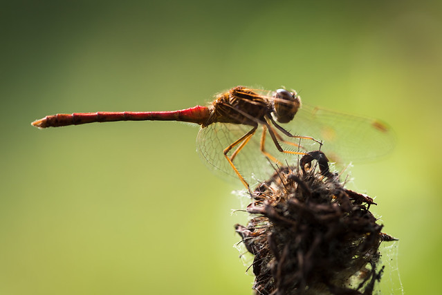 20180813 Dragonfly