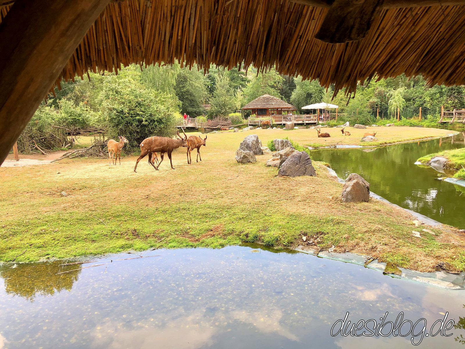 Prag Prague Praha Zoo duesiblog travelblog 03