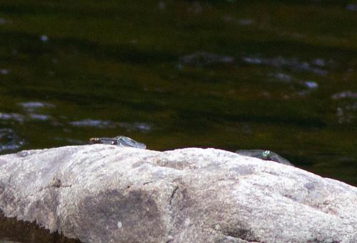 Snaketails